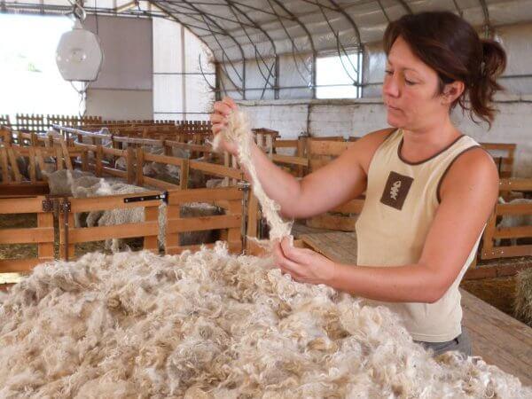 transformation de la laine mohair - tri