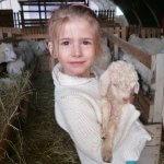 Parrainer une chèvre mohair, c'est original !