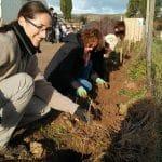 On a planté 223 arbres en 1 journée !